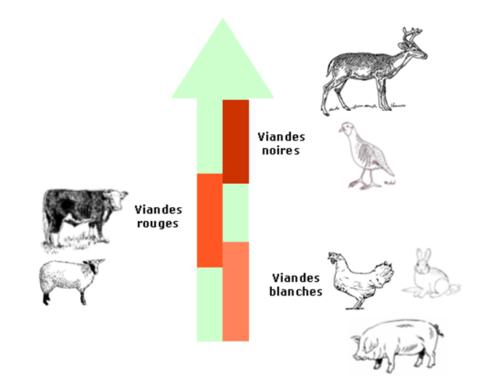 echelle-viande1