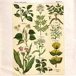 index-plantes
