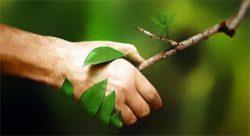 naturopathie-image