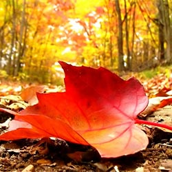 Passage à l'automne